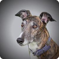 Adopt A Pet :: Barney - Woodinville, WA