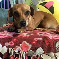 Adopt A Pet :: Apples - York, SC