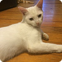 Adopt A Pet :: Lars - Allentown, PA