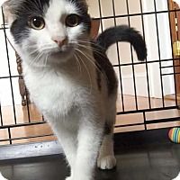 Adopt A Pet :: Spot - Glen cove, NY