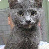 Adopt A Pet :: Brienne - Reeds Spring, MO