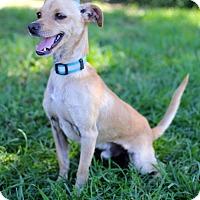 Adopt A Pet :: Sven - San Diego, CA