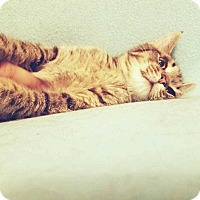 Adopt A Pet :: Gobbles - Topeka, KS