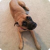 Adopt A Pet :: Tyra - Covington, LA