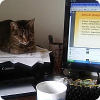 Domestic Shorthair Cat for adoption in Locust, North Carolina - Adeline