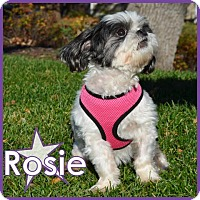 Adopt A Pet :: Rosie - Excelsior, MN