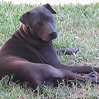 Adopt A Pet :: Onyx - Houston, TX