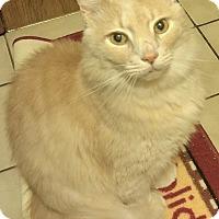Adopt A Pet :: Mike - Greensburg, PA