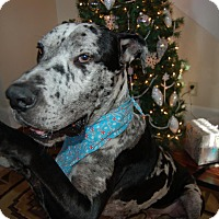 Adopt A Pet :: Samson - Gallatin, TN