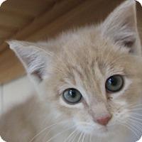 Adopt A Pet :: Gumdrop - North Richland Hills, TX