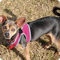 Adopt A Pet :: Abby - McKinney, TX