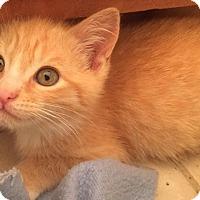 Adopt A Pet :: Kevin McKitt - Gainesville, FL