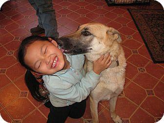 German Shepherd Dog Dog for adoption in Greeneville, Tennessee - Shay
