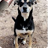 Adopt A Pet :: Bud - Ozark, AL