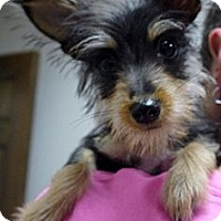 Adopt A Pet :: Scruffy - Baton Rouge, LA