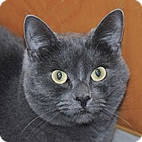 Adopt A Pet :: Maxine - Foothill Ranch, CA