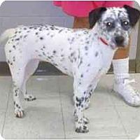 Adopt A Pet :: Kippi - Milwaukee, WI