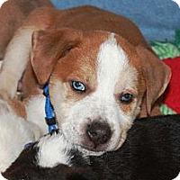 Adopt A Pet :: Nemo - Marietta, GA
