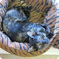 Adopt A Pet :: Tina - Mobile, AL