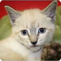 Adopt A Pet :: ISAAC - SILVER SPRING, MD