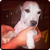 Adopt A Pet :: Basil - Scottsdale, AZ