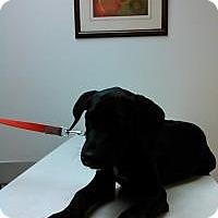 Adopt A Pet :: Martha Washington - Gainesville, FL