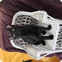 Adopt A Pet :: Sheeba - Marietta, GA