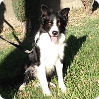 Adopt A Pet :: JASPER - San Pedro, CA