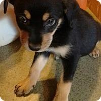 Adopt A Pet :: Val - Trenton, NJ