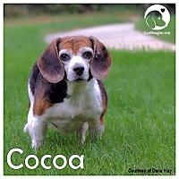 Adopt A Pet :: Cocoa II - Novi, MI