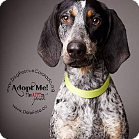 Adopt A Pet :: Zeb - Aurora, CO