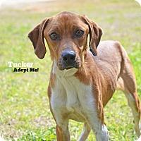 Adopt A Pet :: Tucker - Old Saybrook, CT