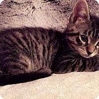 Adopt A Pet :: Raven - Gainesville, FL