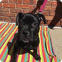 Adopt A Pet :: Gwen - Detroit, MI