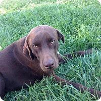 Adopt A Pet :: Lincoln - Aurora, CO