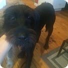 Adopt A Pet :: Pedro