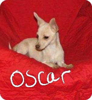 Pomeranian Mix Puppy for adoption in Niagra Falls, New York - Oscar