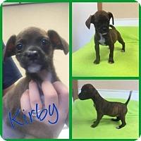 Adopt A Pet :: Kirby - Arlington, TX