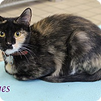 Adopt A Pet :: Eyes - Bradenton, FL