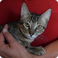 Adopt A Pet :: Nathan - Surrey, BC