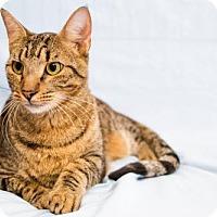 Adopt A Pet :: Esau - Alpharetta, GA