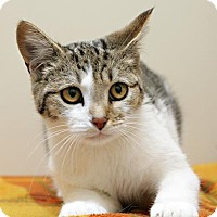 Adopt A Pet :: Merry - Bellingham, WA