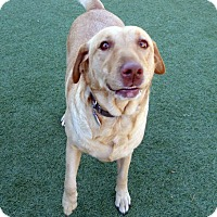 Adopt A Pet :: Abby & Mattie - Falls Church, VA