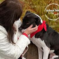 Adopt A Pet :: Joshua - Pearland, TX