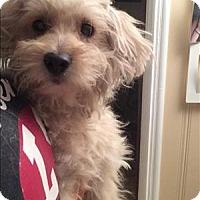 Adopt A Pet :: Gatsby - Encino, CA