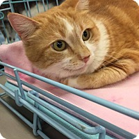 Adopt A Pet :: Wynnona - Mansfield, TX