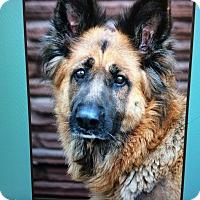 Adopt A Pet :: SHAYLA VON SPARKLE - Los Angeles, CA