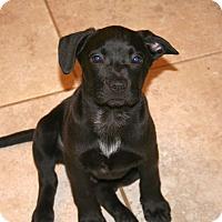 Adopt A Pet :: Zane - Huntsville, AL