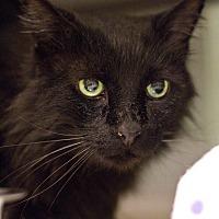 Adopt A Pet :: Fuzzy Lumpkins - Grayslake, IL