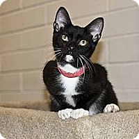 Adopt A Pet :: Magellan - New Port Richey, FL
